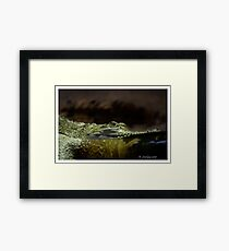 Crocodylus johnstoni Framed Print