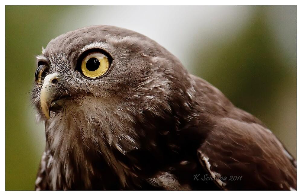 Barking owl 2 by bluetaipan