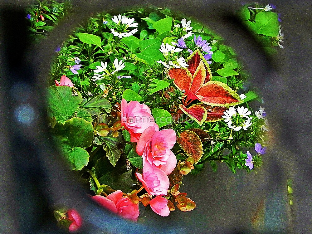 Flowers Through the Gate by bannercgtl10
