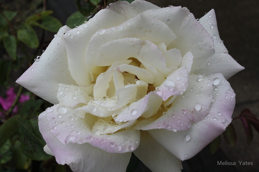 A rose by any other name.... by Melissa  Ousley