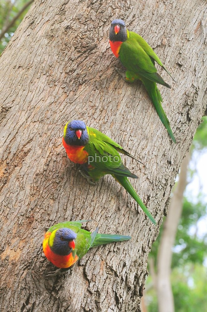 "Birds-"" Three Is A Crowd "" by photoj"