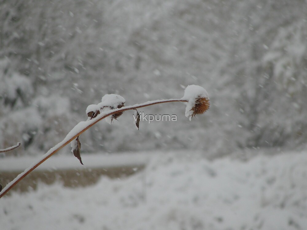 Snowfall and the bud by vikpuma