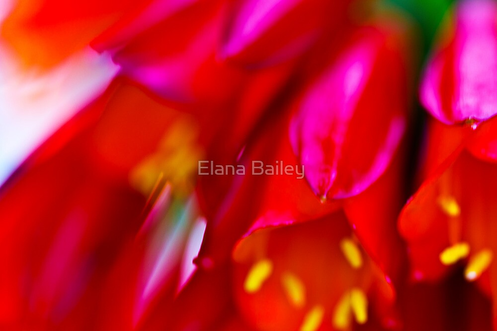 Brilliant colours blowing in the wind by Elana Bailey