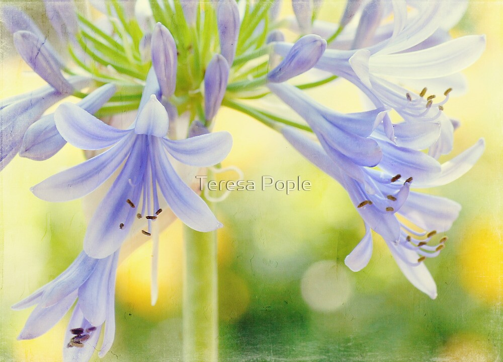 early summer sunshine by Teresa Pople