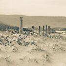 Birdie Beach in winter by Sherilyn Hawley