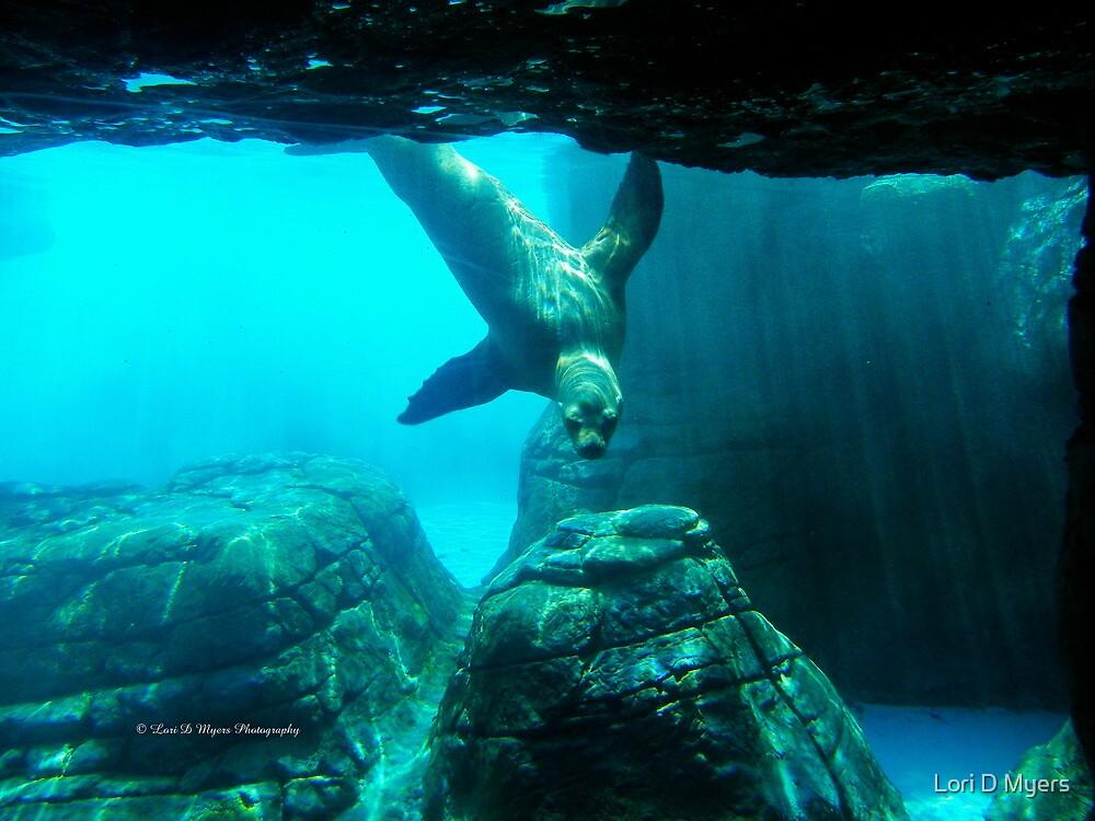Seal #1 by Lori D Myers