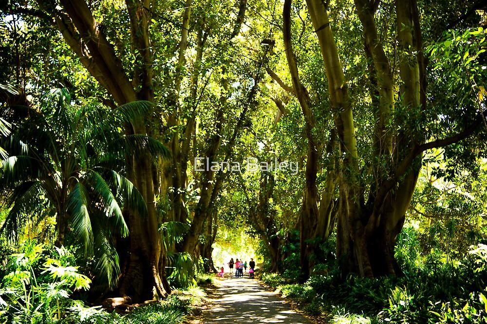 Plane tree drive adelaide botanic gardens by elana for Garden trees adelaide