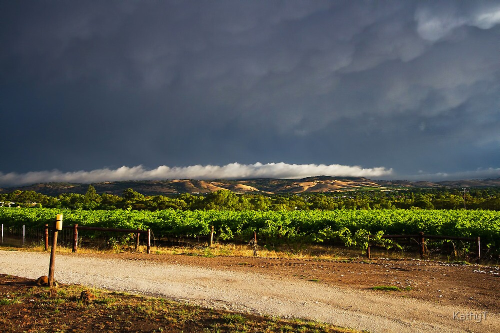 Stormy Day in the Barossa by KathyT