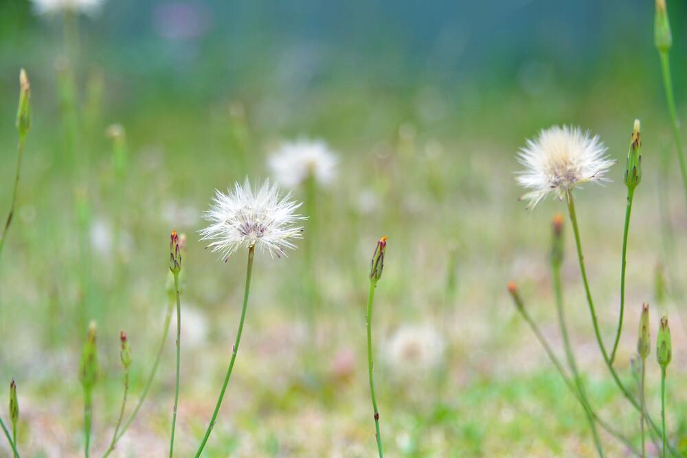 Field of wishes by Deborah Clearwater