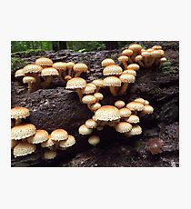 Beech Tree Fungi Photographic Print