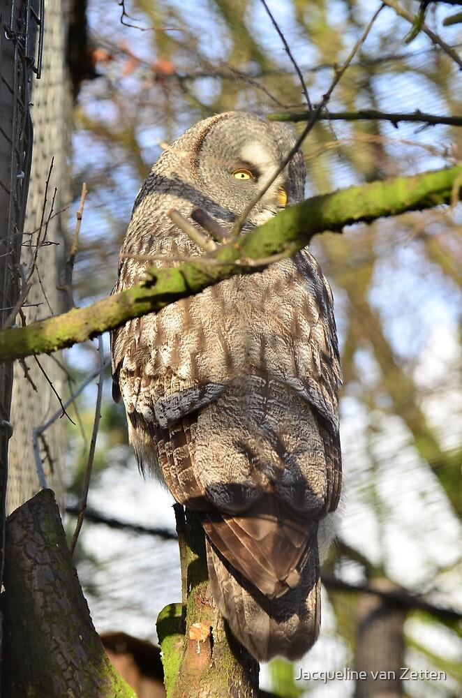Great Grey Owl II by Jacqueline van Zetten