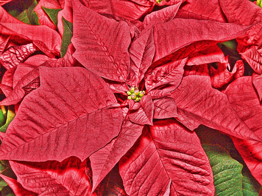 A Sign of the Season by Joy  Rector