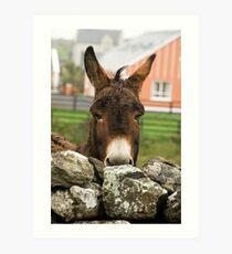 Donkey, Doolin, County Clare, Ireland, October 2011 Art Print