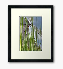 Windmill in the willows Framed Print