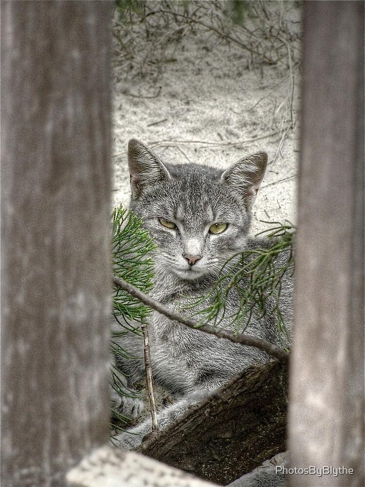 Ferrel by PhotosByBlythe