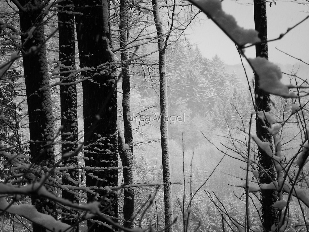 2011 - first snow by moyo