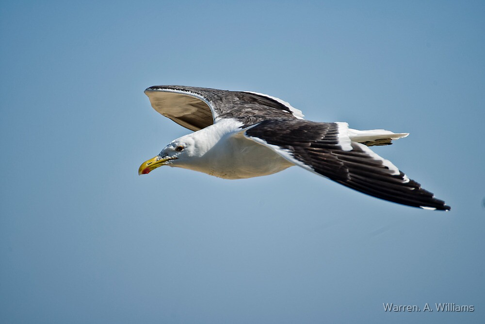 Seagull in the Sky by Warren. A. Williams