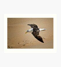 Seagull low level Flight Art Print