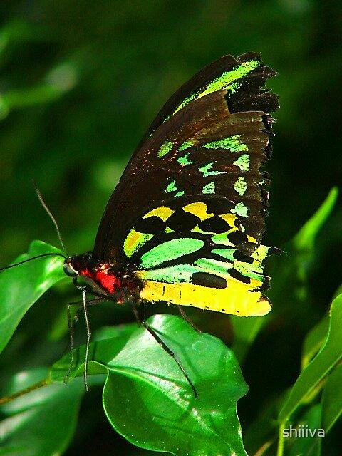 Butterfly Portrait by shiiiva