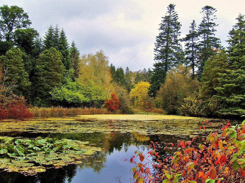 Autumn pond scene by georgeporteous