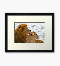 Lions in the Snow Framed Print