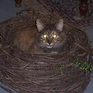 Cat's Nest by astrochuck