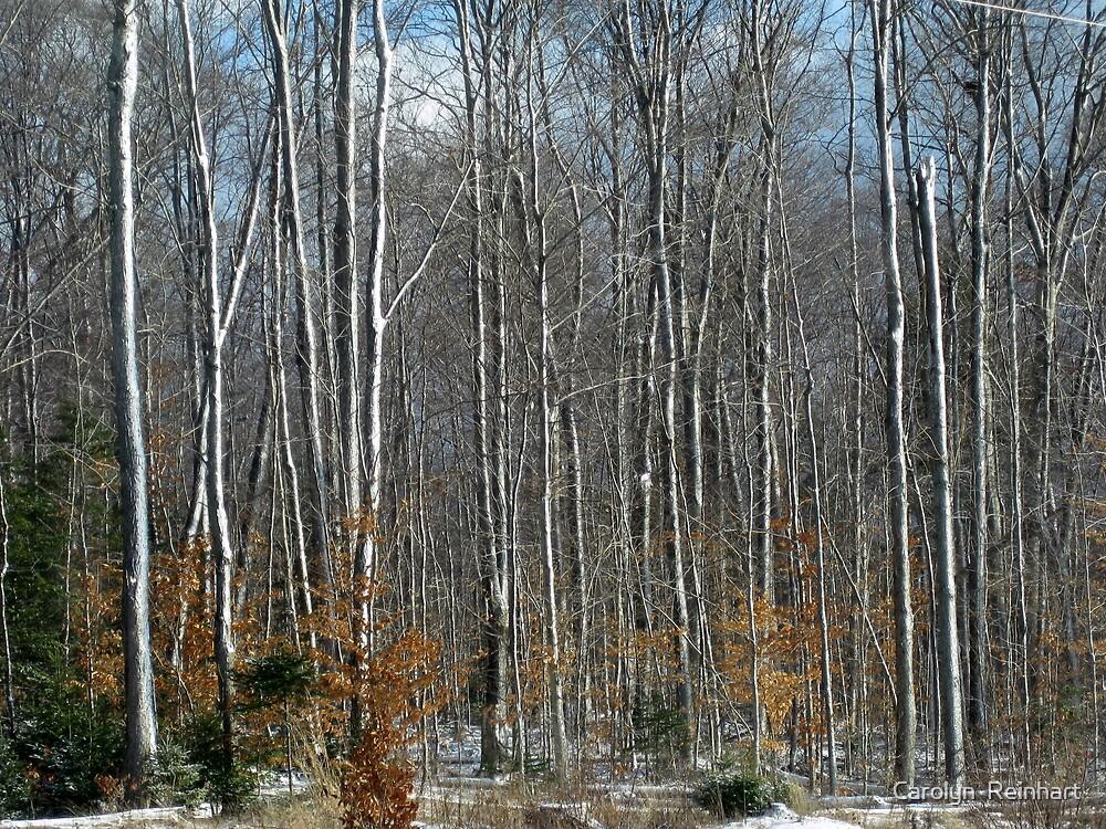 Winter Trees - Muskoka by Carolyn  Reinhart