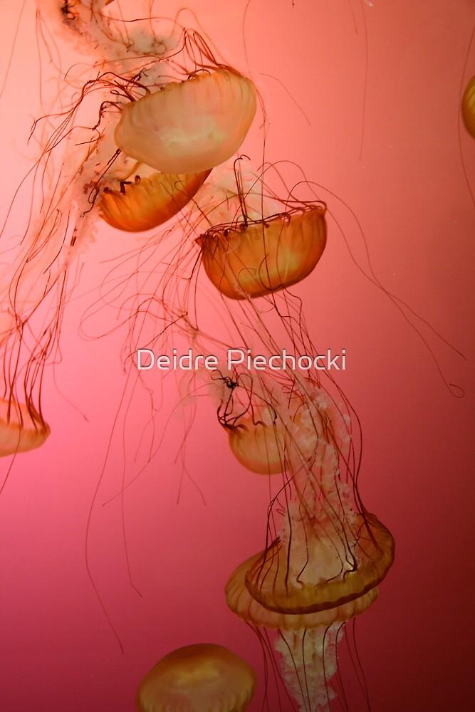 Jellyfish by Deidre Piechocki