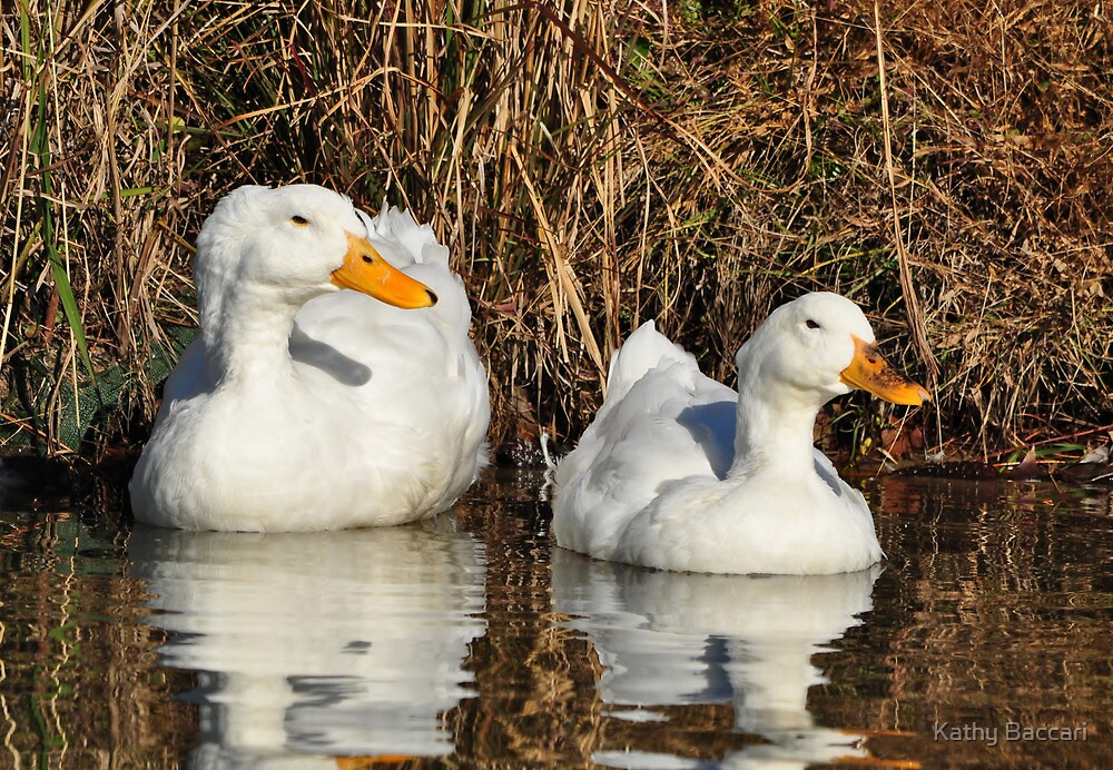 White Duck Couple by Kathy Baccari