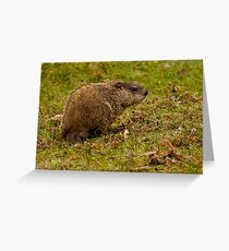 Rodent In The Rain Greeting Card