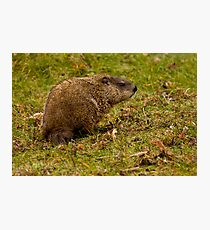Rodent In The Rain Photographic Print