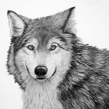Wolf Sketch in Pencil by artbylorraine
