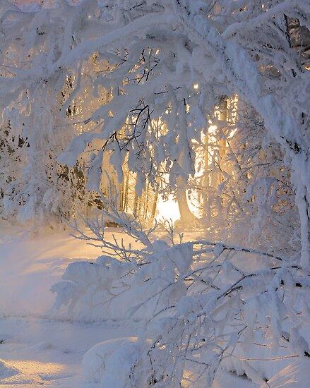 Good Morning Sunshine  by Kari Liimatainen