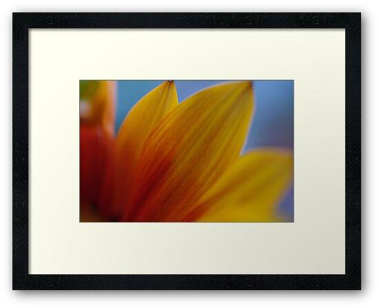 Orange Petals by Liz Worth