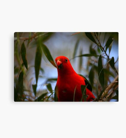 King Parrot Canvas Print