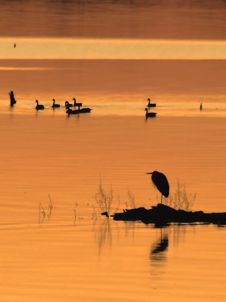 Peace On Earth by Carolyn  Fletcher