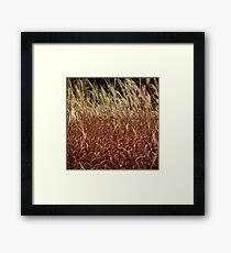 Soft Swaying Autumn Grasses Framed Print