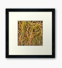 Tri Colored Autumn Grasses  Framed Print