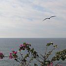 Ocean and Flowers and Bird - Océano y flores y Pajaro by PtoVallartaMex