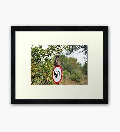 PLEASE TAKE NOTE OF THE SPEED ZONE! - THE CHACHMA BABOON - Papio ursinus Framed Print