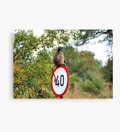 PLEASE TAKE NOTE OF THE SPEED ZONE! - THE CHACHMA BABOON - Papio ursinus Canvas Print