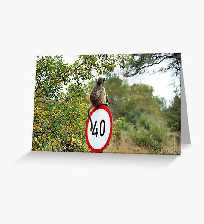 PLEASE TAKE NOTE OF THE SPEED ZONE! - THE CHACHMA BABOON - Papio ursinus Greeting Card