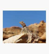 I am the Lizard King Photographic Print
