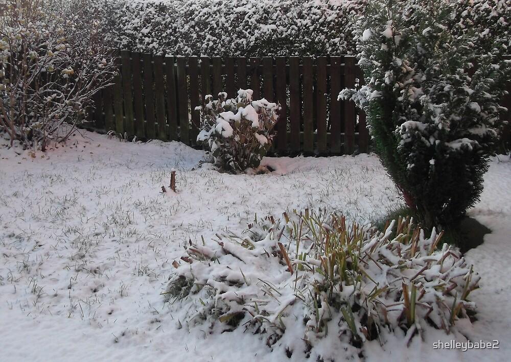 A Winter Garden by shelleybabe2