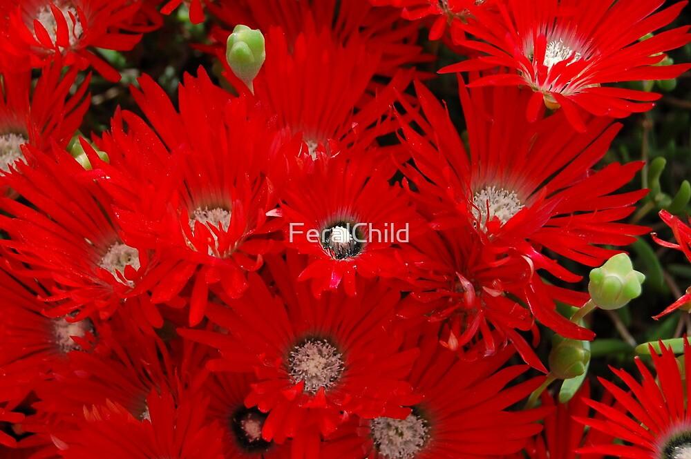 Spring by FeralChild