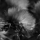 Dry Wild Artichoke by Anthony Vella