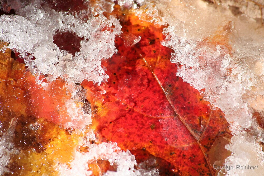 Leaves and Ice by Carolyn  Reinhart