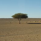 Life in the Desert by Alisdair Gurney