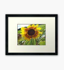 Raise of sunflower. Photography by Joshua Fronczak Framed Print