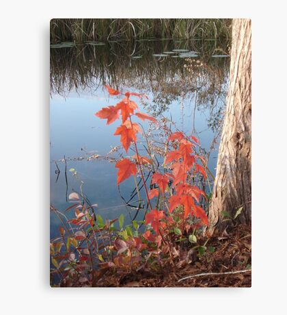 MAPLE SEEDLING, CYPRESS AND CREEK Canvas Print